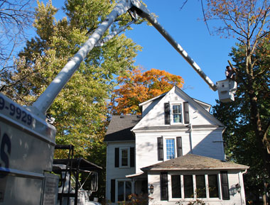 trees removed and trimmed in Batavia, Geneva, St. Charles, Aurora
